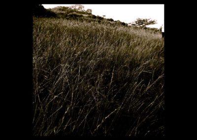 grass copy